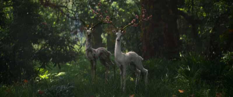 ann-deer.jpg